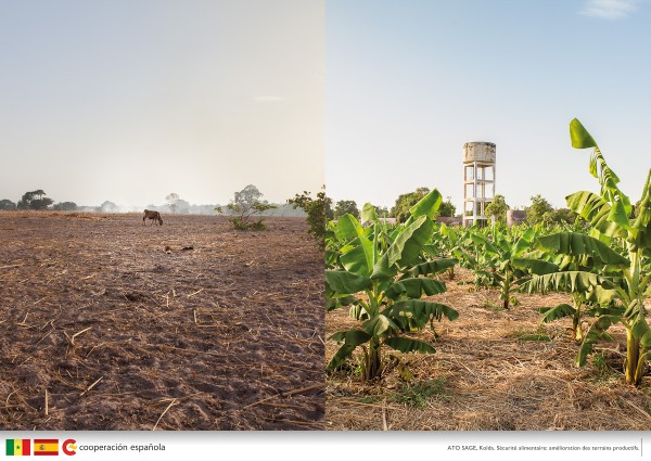 Land before and after the spanish cooperation project implantation. Kolda, Casamance.