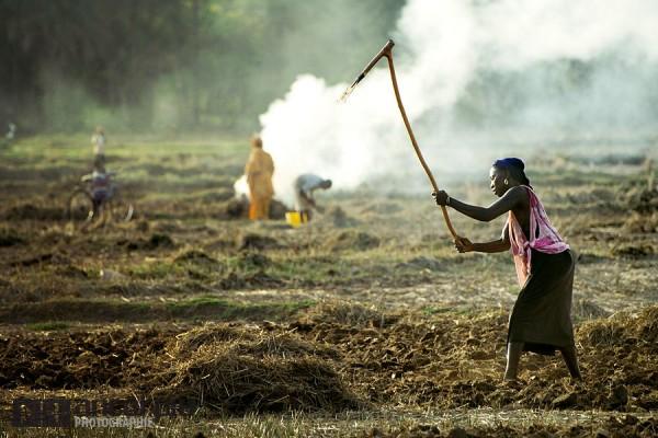 Farming in Casamance.